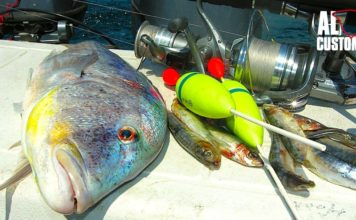 FISHING ATTITUDE dentice1