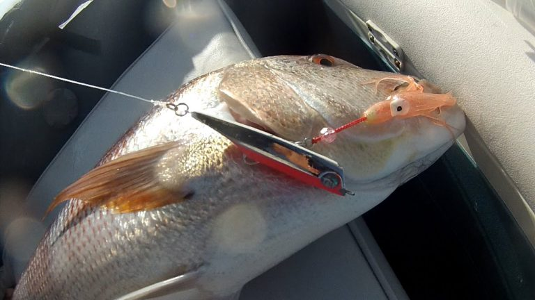 Ψάρεμα INCHIKU