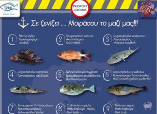 dilitiriodi_psaria_hellasfishing